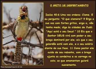 2015 0407 o grito de despertamento portugues