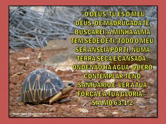 2015 0410 o deus tu es o meu deus portugues