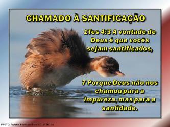 2015 0524 chamado a santificacao portugues
