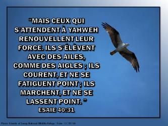 2015 0611 mais ceux qui s attendent a yahweh esaie 40 31
