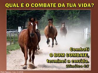 2016 0202 2timoteo 4 7 combati o bom combate portugues